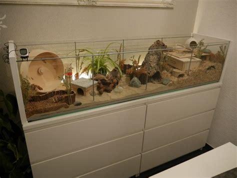 une vitrine detolf transform 233 en une cage detolfvitrine in hamsterk 228 fig umgewandelt detolf