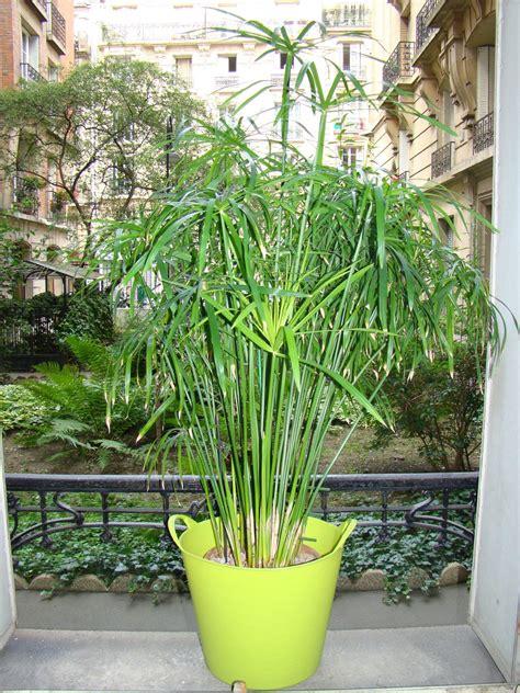 plante d ext 233 rieur pour balcon photos de magnolisafleur