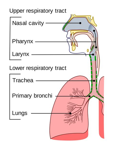 Upper Respiratory Tract. Therapy Classes For Depression. Fresh Healthy Vending Reviews. California Solar Company Oak Tree Landscaping. Website Creating Sites Satellite Tv Frequency. Drug Addiction Recovery Programs. Att Cable Tv And Internet Training For A Chef. Discover Identity Theft Ohio State Admissions. Help Me Get Out Of Credit Card Debt