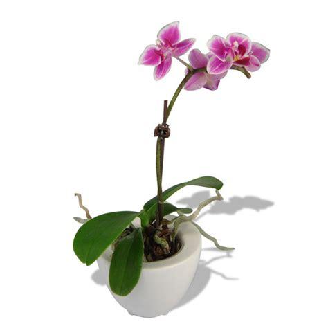 cadeau d entreprise de fin d 233 e offrez un peu de nature avec une plante publicitaire