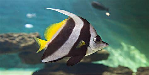 aquarium le 7 232 me continent talmont st hilaire sorties nature