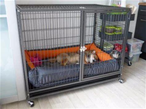 enclos chien parc chien cage chien cage chat ciel et terre