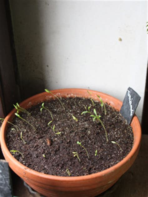 pour les semis presse motte ou petits pots quot maison quot quoi de neuf au potager