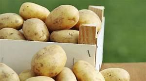 Kartoffeln Und Zwiebeln Lagern : kartoffeln ernten und lagern so macht man es richtig ~ Markanthonyermac.com Haus und Dekorationen