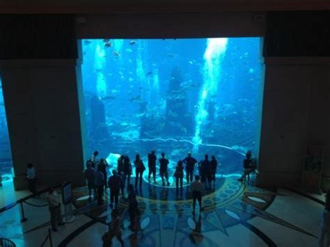 aquarium picture of atlantis the palm dubai tripadvisor