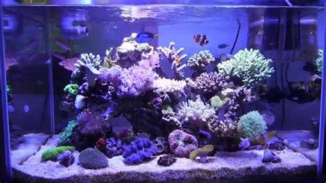 marine aquarium reef tank 55gallon 200l