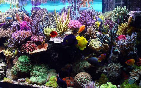 desktop background fond d 233 cran anim 233 gratuit aquarium