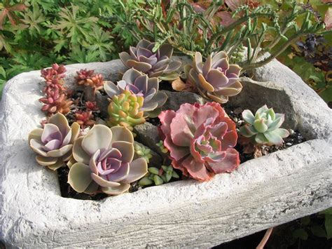 Succulents In Cold Climates-yes, You Can!