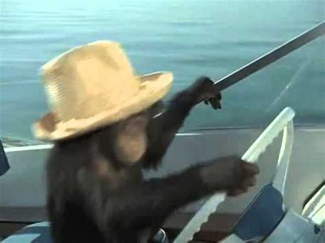 Boat Driving Youtube by Monkey Driving Boat Youtube
