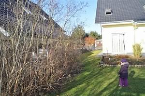 Schnellwachsende Sträucher Als Sichtschutz : sichtschutzzaun aus holz sichtschutzwand als gartenzaun zum nachbargrundst ck hausbau blog ~ Markanthonyermac.com Haus und Dekorationen