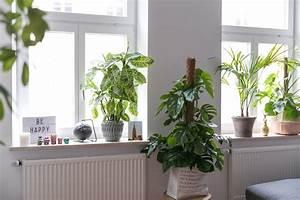 Fensterbank Dekorieren Wohnzimmer : deko fensterbank wohnzimmer ~ Markanthonyermac.com Haus und Dekorationen
