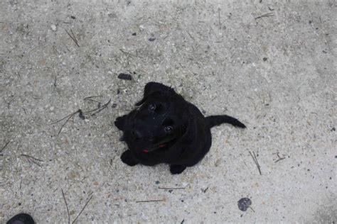 ni un ni deux igor fait pipi sur mon tapis 201 l 232 ve chien guide