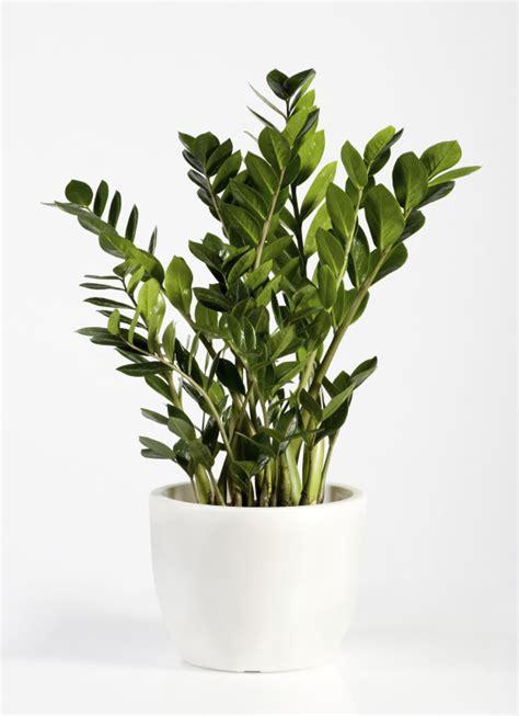 ces plantes d int 233 rieur robustes que vous pouvez offrir 224 n importe qui