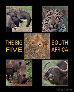 The Big Five of South Africa | EnviroQuest