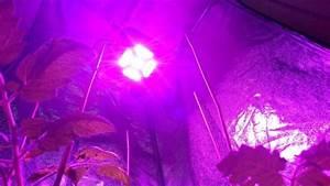 Pflanzen Led Licht : growblog vergleiche tips tricks ~ Markanthonyermac.com Haus und Dekorationen