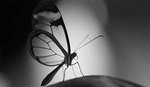 Schwarz Weiß Kontrast : schwarz wei fotografie wie lerne ich besser fotografieren ~ Markanthonyermac.com Haus und Dekorationen