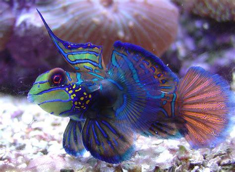 le plus beau poisson d aquarium page 1