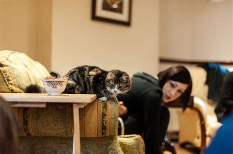 Lady Dinah's Cat Emporium Now Open In Shoreditch