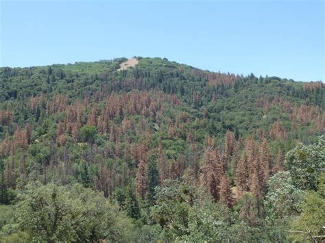 Nearly All Us Forests Threatened By Drought, Climate