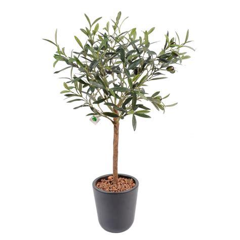 un olivier en pot 28 images l olivier forg 233 oliviers en pots l olivier en pot planter