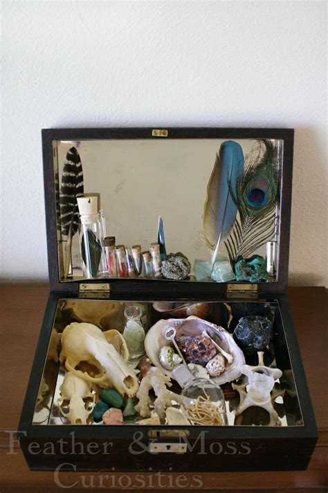 cabinet of curiosities book gordon grice cabinets design ideas