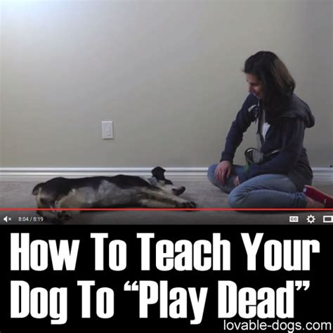 Lovable Dogs How To Teach Your Dog To Play Dead  Lovable Dogs