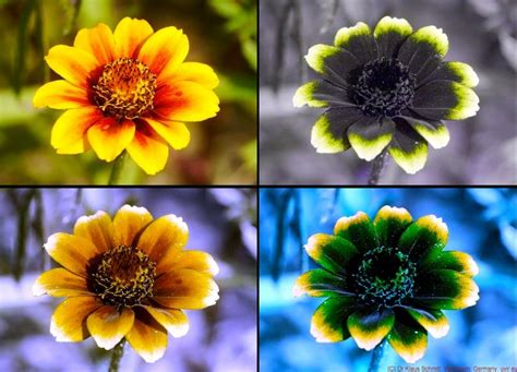 are bees color blind 17 best images about photography micro macro uv timelapse