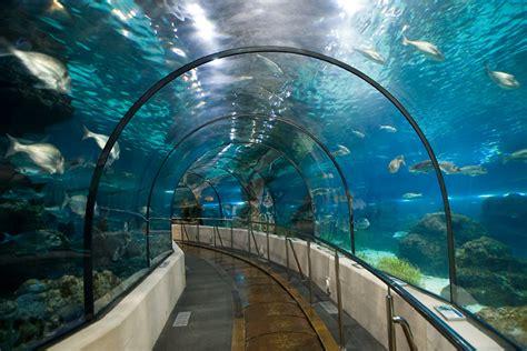 barcelona aquarium discover l aqu 224 rium de barcelona