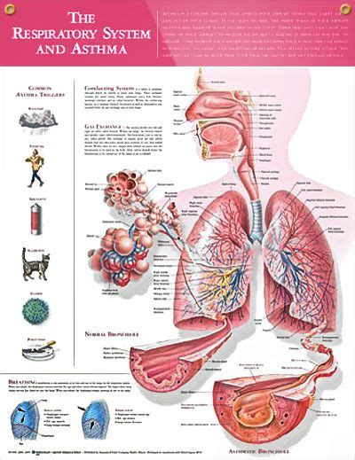 101 Best Asthma Facts Images On Pinterest  Asthma. Lvn To Rn Programs Online Key Life Insurance. Culinary Schools In Richmond Va. Family Therapist Degree Boca Raton Las Vegas. Best Fixed Income Annuities 4 3 Inch Phones. Cheap Hosting Reseller Web Buying New Laptop. Company Emergency Response Plan. Independent Living Senior Care. Leland West Insurance Reviews