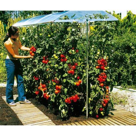 culture de tomates en pot et toit en alluminium pour effet serre potager a venir