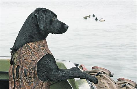 Boat Dog Quotes by G Quotes About Hunting Dog Quotesgram