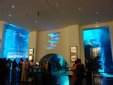 dubai mall aquarium tunnel exit ticket desks 187 dubai aquarium underwater zoo gallery