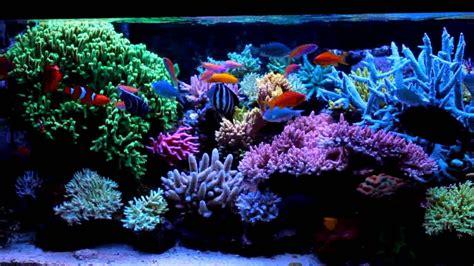 and luxury with saltwater fish aquarium aquarium design ideas