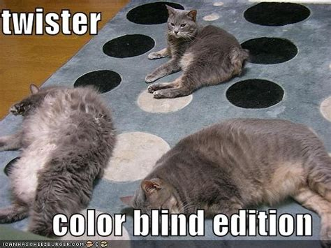 are cats color blind color blind pictures