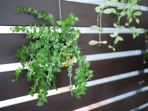 Low Light Plants  Popular Indoor Hanging Plants For Low Light. Homesoftherich. Chandelier Over Kitchen Island. Ceiling Curtain Track. Nilson Homes. Farmhouse Style Desk. Barn Door Inside House. Grey And Yellow. Gen Stone