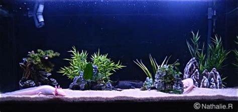 aquarium id 233 al pour axolotls