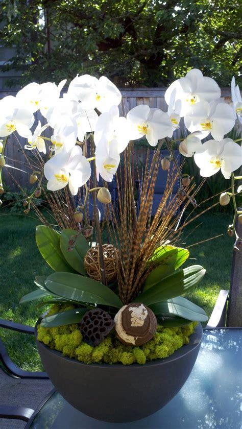entretien des orchid 233 es savoir tout sur ces fleurs exotiques