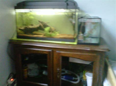 quel aquarium choisir