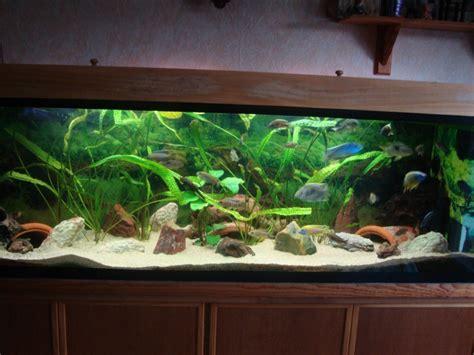 mod 232 le d 233 coration asiatique pour aquarium