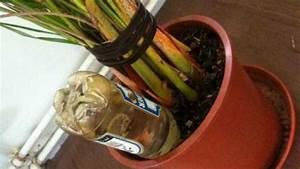 Pflanzen Bewässern Mit Plastikflasche : flaschen statt blumen gie en frag mutti ~ Markanthonyermac.com Haus und Dekorationen