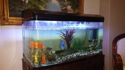aquarium for sale kenya tanks for sale limuru town co ke 2017 fish tank maintenance