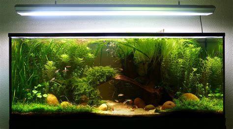 plantes pour betta en 54l forum plantes