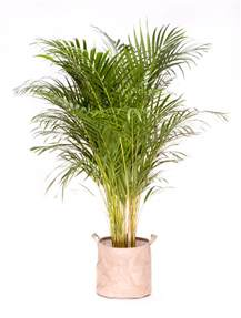 plante verte d interieur depolluante photos de magnolisafleur