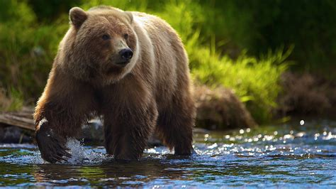 Bear Wallpaper Mobile  Animals Wallpapers Pinterest