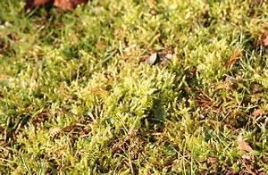 Holzasche Im Garten Verwenden : den rasen im fr hjahr richtig pflegen in 2018 gartenfreude pinterest rasen garten und ~ Markanthonyermac.com Haus und Dekorationen
