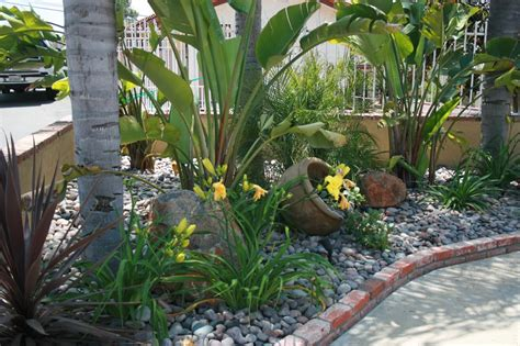 bird of paradise daylilies and accent pot with cobble yelp