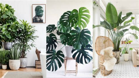 Home Decor Plants : A List Of The Best Indoor Plants For Fabulous Home Decor