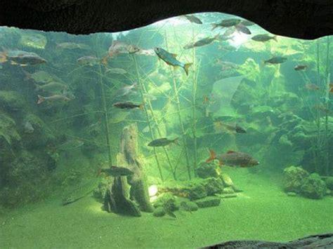 aquarium du p 233 rigord noir au bugue en dordogne un site incontournable