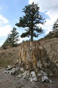 florissant fossil beds these 13 gems in colorado hold historic to the