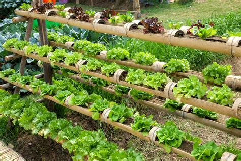 Growing Veggies By Vertical Gardening-southeast Agnet